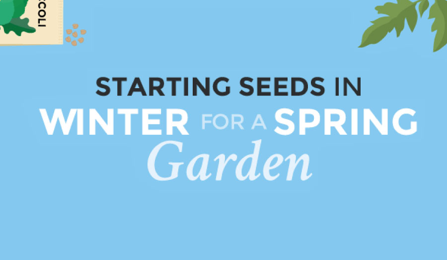 Starting Seed in Winter for a Spring Garden